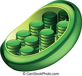 Chloroplast - Illustration of a chloroplast