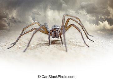 chlupatý, pavouk