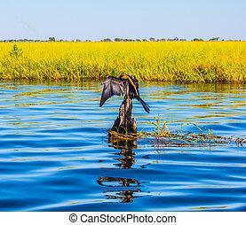 Chobe Park on the Zambezi River