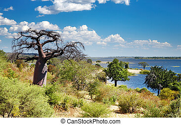 Chobe river in Botswana - African landscape, Chobe river,...
