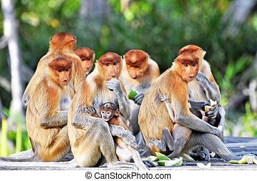 chobot, skupina, opicí