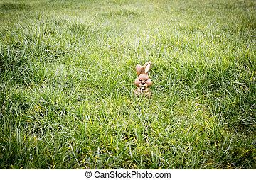 Chocolate bunny hiding in the grass - Cute chocolate bunny...