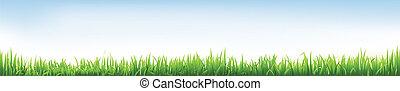 chodnikowiec, trawa
