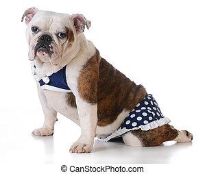 chodząc, kąpanie się, pies, garnitur