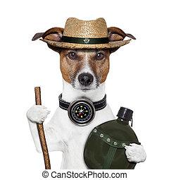 chodzić na piesze wycieczki, kapelusz, pies, busola