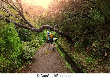 chodzić na piesze wycieczki, madera