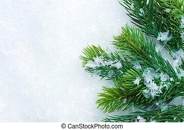 choinka, na, snow., zima, tło