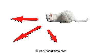 choisir, décider, r, chat, choise, mieux, choisir