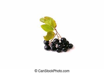chokeberry, bianco, nero, isolato, fondo