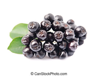 Chokeberry - Black chokeberry with leaves close up. Black ...