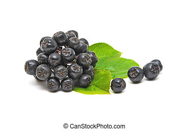 chokeberry on a white background - Aronia with leaves (...