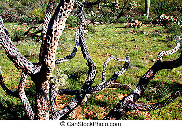 The skeleton of a Cholla cactus