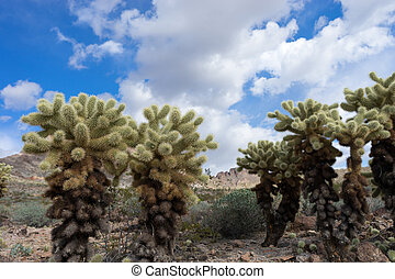 cholla cactus against the cloudy sky in Arizona