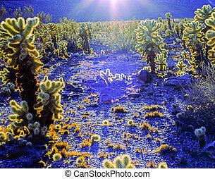 Cholla Cactus, California
