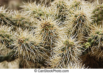 Close-up of the arms and spines on a cholla cactus.