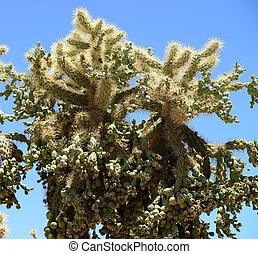Cholla cactus in blue sky sonora desert Arizona