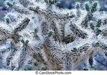 Close up macro of Cholla cactus Sonora desert mid summer
