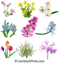 chomáč, květiny