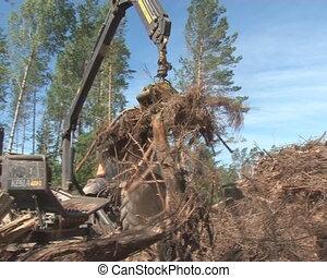 chop tree branch fuel