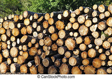 Chopped wood logs for sale