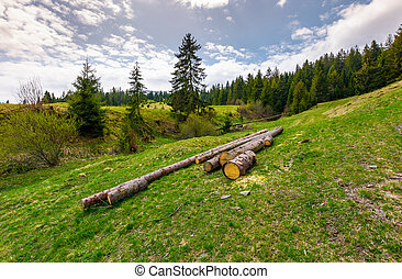 chopped wood near the forest on hillside. springtime nature...