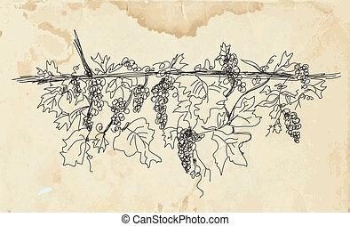 chorągiew, papier, winogrono, struktura, wino