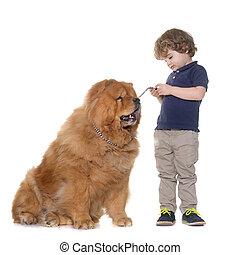 chow chow, dog, en, jongetje