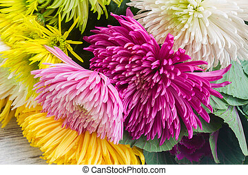 chrisantemum, 花, 花束