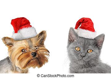 chrismas, kutya, és, macska