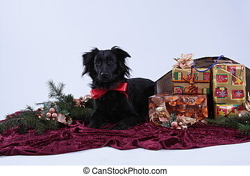 chrismastdog