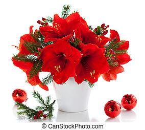 Christmas arrangement of amaryllis - red amaryllis in vase...