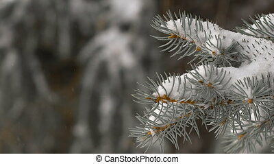 Christmas background. beautiful snow-covered fir branches. soft snows.