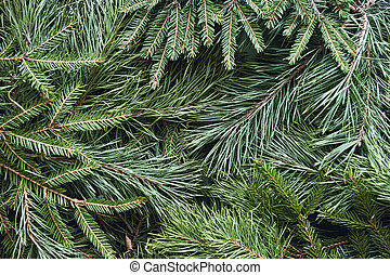 Christmas background of green spruce and pine branches