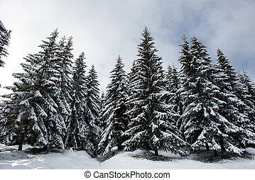 Christmas background of snowy winter landscape