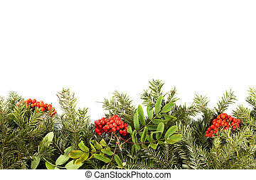 Christmas background with decorations, holly berry, cones isolated on white.