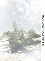 Christmas background with stars and snowy fir trees