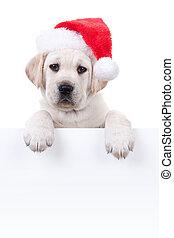 Christmas Banner Dog - Christmas Labrador puppy dog in santa...