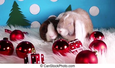 Christmas bauble red ball animal pet lop cute cavy love...
