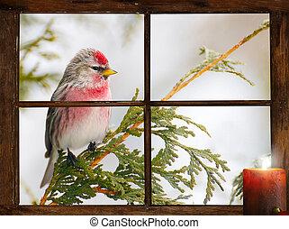 Christmas bird.