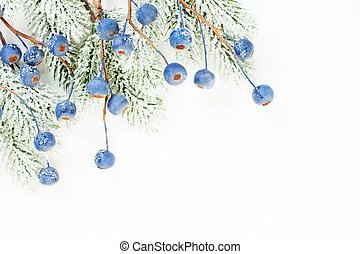 Christmas border of Xmas tree branch and blue berries isolated on white background