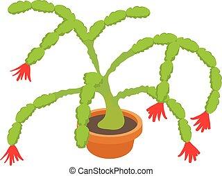 Christmas cactus icon, cartoon style