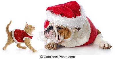 christmas cat and dog - adorable cat and dog dressed up for...