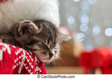Christmas cat wearing Santa Claus hat sleeping on plaid under christmas tree with blurry festive decor. Adorable little tabby kitten, kitty, cat. Cozy home. Animal, pet, cat. Close up, copy space