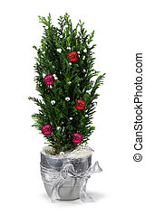 Christmas cypress decoration - Christmas decoration cypress...