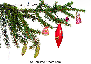 Bare branch of Christmas fir tree