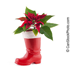 Christmas decoration poinsettia in Santa Claus Boots...