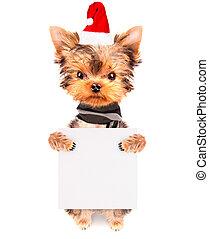 christmas dog as santa with banner - christmas dog as santa...