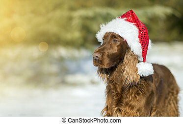 Christmas dog card template