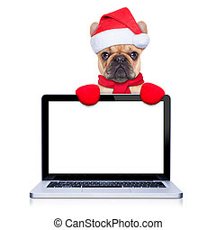 christmas fawn french bulldog dog with santa claus costume behind a laptop computer pc, isolated on white background