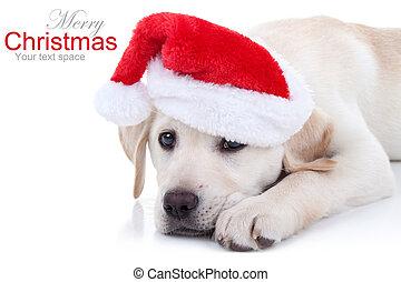 Christmas Dog - Christmas Labrador puppy dog in Santa hat on...
